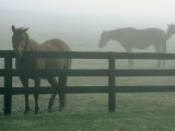 Horses in Fog  Chesapeake City  MD