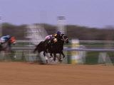 Jockey on Horse in Race