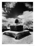 Topiary at Arley Hall  Cheshire  England