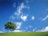 Tree  Devon  England