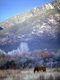 Nm  Taos  Sangre De Christo Mountains