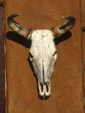 Skull  Santa Fe  NM