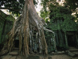 Ta Prohm  400-year-old Tree  Cambodia