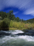 Trout Stream at Snake River Near Jackson Hole  WY