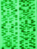 DNA Sequence  a Non- Photosynthetic Algae