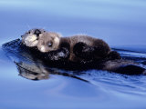Sea Otter with Offspring