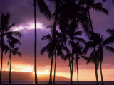 Silhouette of Palm Trees  Hawaii