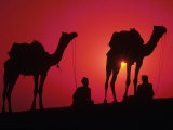 Silhouette of Men and Camels  India