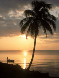 Sunrise with Man in Boat and Palm Tree  Belize