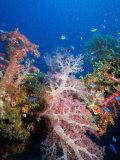 Soft Coral  Truck Lagoon  Micronesia