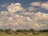 Herd of Elephants  Etosha National Park  Namibia