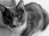 Black and White Image of a Cat