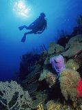 Silhouette of Scuba Diver Underwater  Honduras