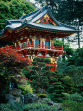 Japanese Tea Garden  San Francisco  CA