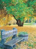 Bench  Autumn Colors