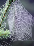 Spider Webs and Dew Drops