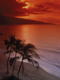Aerial of Tropical Beach at Sunset  Maui  HI