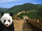 Panda and Great Wall of China