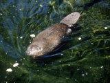 Beaver, USA Papier Photo par Mary Plage