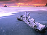 Rialto Beach Sunset with Driftwood Log