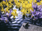 Frog  Sheet Music and Flowers in Water