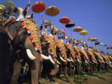 The Great Elephant March  Trissur  Kerala  India