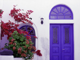 Pink Flowering Bougainvillea (Paper Flower)  Whitewashed Walls of House  Santorini  Greece