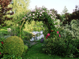 "View of Pond Through Timber Arch Covered with Rosa ""Francis E Lester"" New Barn"