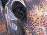 Goa  India  Close-up of Elephants Eye