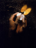 Hand with Egg Shell and Butterfly