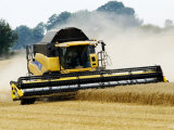 Yellow New Holland Combine Harvester Harvesting Wheat Field  UK