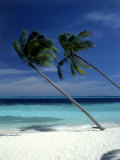 Palm Trees on Tropical Beach  Maldives