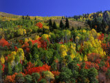 Trees with Fall Foliage