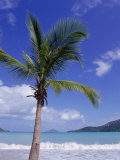 Palm Tree  Magens Bay  St Thomas  USVI
