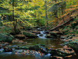 Ricketts Glen State PArk  PA