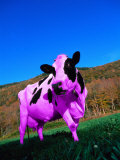 Purple Cow in a Field