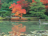Japanese Tea Garden  WA