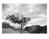 Lone Tree Over Canyonlands