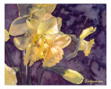 Moonlight Daffodils Watercolor