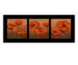 Oriential Poppies
