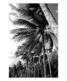PO-07A Windy Palms
