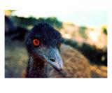 AI-09A Emu