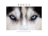 Focus - Concentration Is The Secret Of Strength