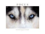 Focus, La concentration est le secret de la force Papier Photo par Brian Horisk