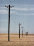 A Line of Telephone Poles Traveling over Golden Grassland