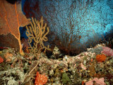 A Coral Scene with Grouper Fish