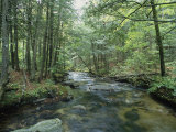 A Woodland View with a Rushing Brook