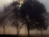 The Sun Peeks Through the Branches of a Tree Shrouded in Mist