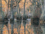Sunlight Through a Cypress Swamp with Reflections