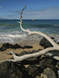 A Tree Branch Juts out over a Beach Along the West Coast of Maui